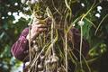 Farmer - PhotoDune Item for Sale