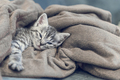 little kitten at home - PhotoDune Item for Sale