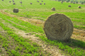 Hay harvest in Tuscany - PhotoDune Item for Sale