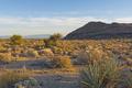 Evening Light in the Desert - PhotoDune Item for Sale