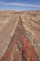 Very Long Petrified Log in the Desert - PhotoDune Item for Sale