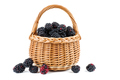 Blackberries in wicker basket isolated on white background - PhotoDune Item for Sale
