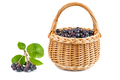 Wicker basket with chokeberries isolated on white background - PhotoDune Item for Sale