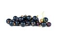 Small pile of fresh black currant berries - PhotoDune Item for Sale
