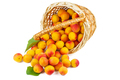Fresh apricots in wicker basket isolated on white background - PhotoDune Item for Sale