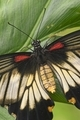 Close up of tropical butterfly - PhotoDune Item for Sale