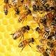 Bee Hive Loop