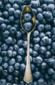 Fresh huckleberry full frame food background - PhotoDune Item for Sale