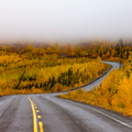 Winding golden fall taiga road Yukon Canada - PhotoDune Item for Sale