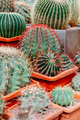 Different kinds of cacti in a greenhouse - PhotoDune Item for Sale