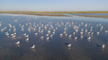 colony of seagulls - PhotoDune Item for Sale