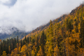 Autumn landscape in the mountains with golden larches. Canada - PhotoDune Item for Sale