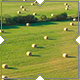 Hay Bales On Green Field - VideoHive Item for Sale