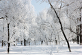 Beautiful Winter Landscape In The Forest, Clear Frosty Day. - PhotoDune Item for Sale