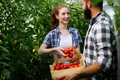 Woman and man in tomato plant at hothouse - PhotoDune Item for Sale
