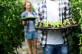 Two young smiling people working in greenhouse with sprouts - PhotoDune Item for Sale