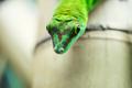 Close up green lizard eye - PhotoDune Item for Sale