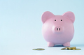 Pink piggy face on over a blue background - PhotoDune Item for Sale