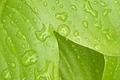 Detail of rain water drops on bright green leaves. - PhotoDune Item for Sale