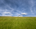 Blue Sky over Green Meadows with an Isolated Tree - PhotoDune Item for Sale