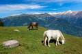 Horses grazing in mountains - PhotoDune Item for Sale