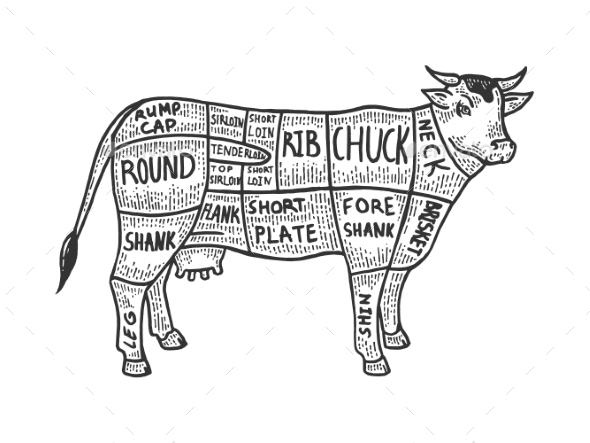 Meat Diagram Cow Sketch Engraving Vector