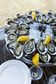Plate of oysters in a French bistro - PhotoDune Item for Sale