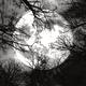 Eerie Mystical Environment