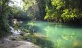 Rio Grande and Dense Jungle in Belize - PhotoDune Item for Sale