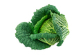 Isolated fresh savoy cabbage head - PhotoDune Item for Sale