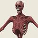 Dead Man Skeleton - 3DOcean Item for Sale