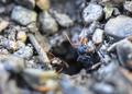 Jack Jumper Ants in Tasmania - PhotoDune Item for Sale
