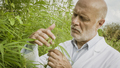 Scientist checking hemp plants in the field - PhotoDune Item for Sale