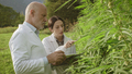 Agronomists doing a quality control in a hemp field - PhotoDune Item for Sale