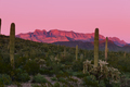 Sunset Ajo Range Organ Pipe Cactus NM landscape AZ - PhotoDune Item for Sale