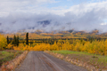 Small dirt road golden taiga fogs Yukon Canada - PhotoDune Item for Sale