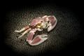 Porcelain crab in anemone - PhotoDune Item for Sale