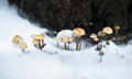 Frozen Mushrooms in the Snow in New Zealand - PhotoDune Item for Sale