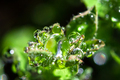Dewdrops on a Leaf in the Sunlight in Australia - PhotoDune Item for Sale