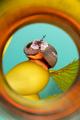 Norris Top Snail on Kelp - PhotoDune Item for Sale