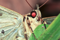 Moth Up Close at Night in Belize - PhotoDune Item for Sale