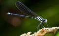 Damselfly in the Sunlight in Costa Rica - PhotoDune Item for Sale