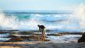 Photographer at the Ocean in Victoria, Australia - PhotoDune Item for Sale