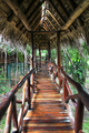 Wooden Walkway With Thatch Roof in the Jungle in Belize - PhotoDune Item for Sale