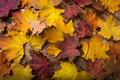 Rustic table with fall maple leaves - PhotoDune Item for Sale
