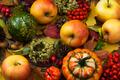 Fall leaves, rowan berries and apples - PhotoDune Item for Sale