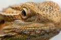Lizard's eye - PhotoDune Item for Sale