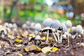 Growing Mushrooms 2 - PhotoDune Item for Sale