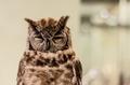 in ironic owl - PhotoDune Item for Sale