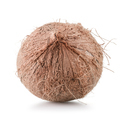 Coconut isolated - PhotoDune Item for Sale